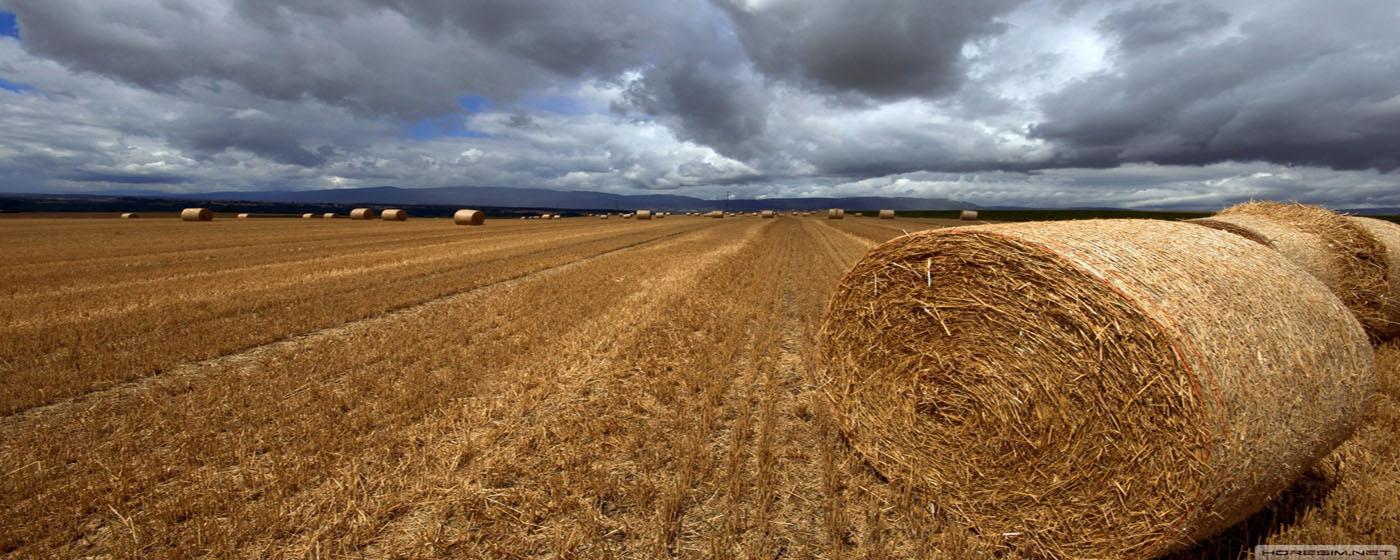 Türkiyenin en büyük saman ihracatçısı